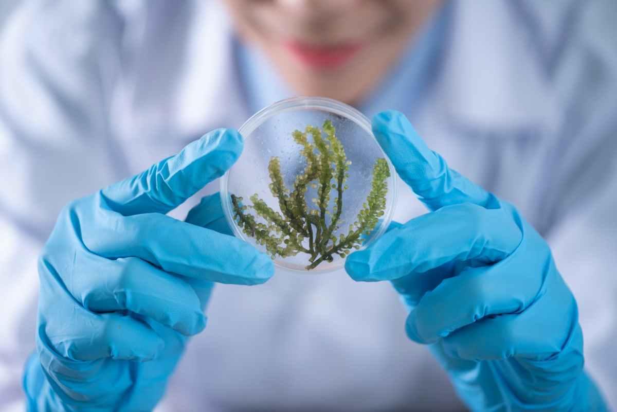 Covid 19: biodiversità ed equilibriambientali