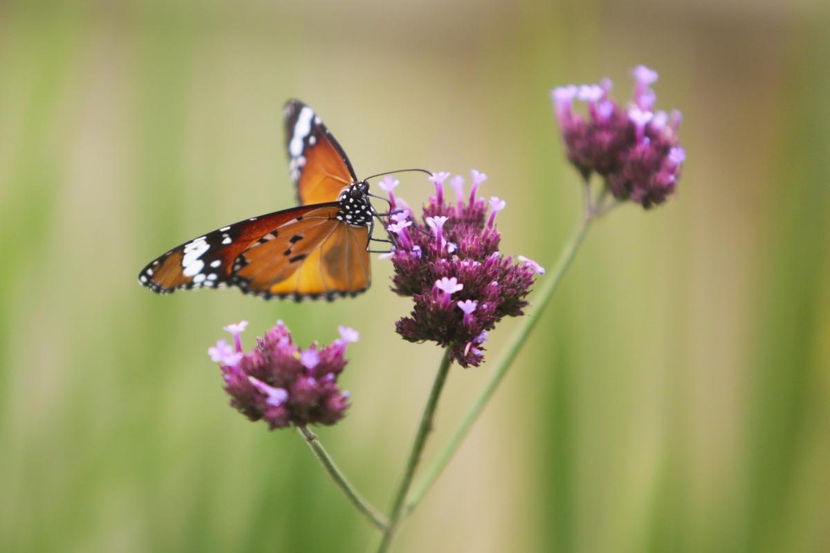 Impariamo a rispettare la natura e labiodiversità