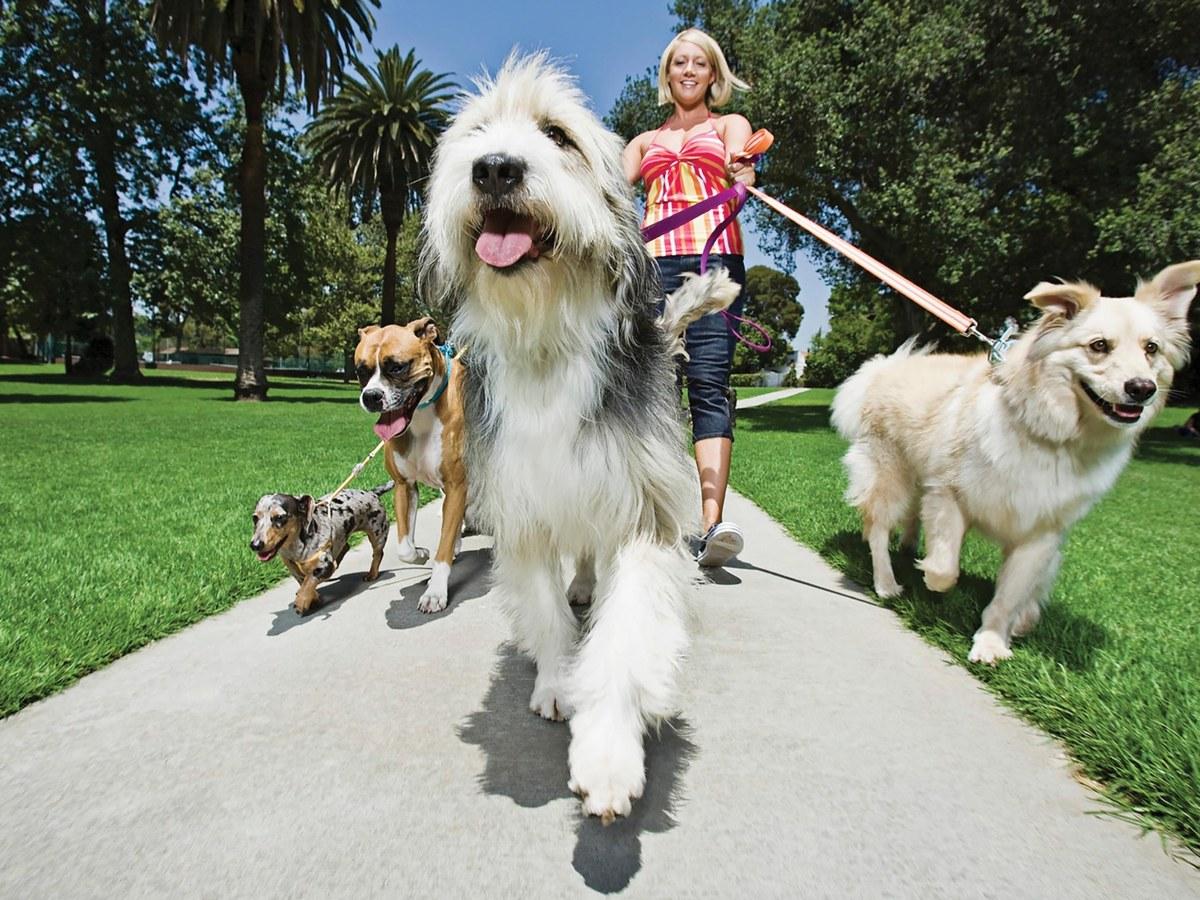 a passeggio con il cane