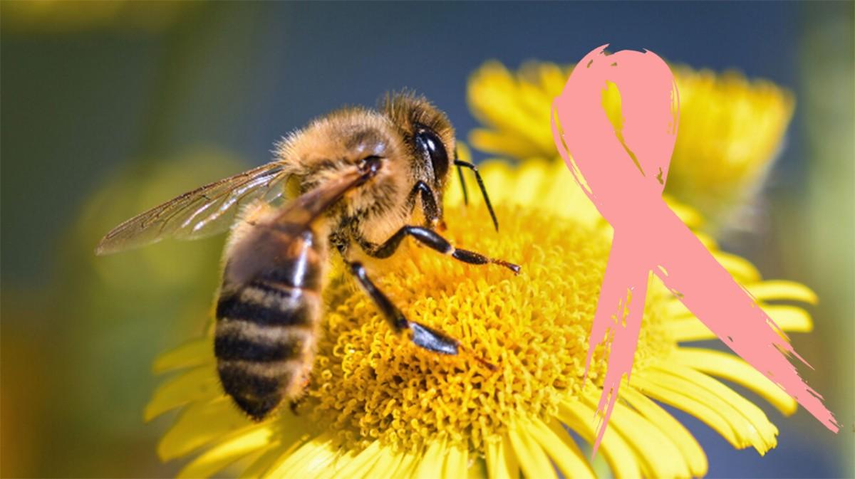 Tumore al seno: il veleno delle api puòucciderlo